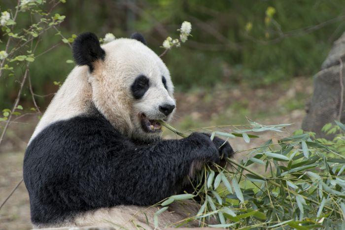 Panda-4.0-en-4-sencillos-pasos